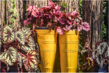 A pair of yellow wellington boots that are repurposed and used as flower pots