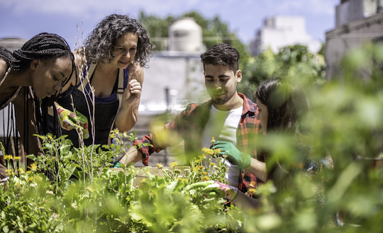 Young people learning around a raised bed. Urban gardening